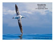 Lecture 13 27 Sept Seabirds