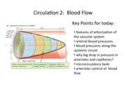 24-Circulation 2, blood flow 2