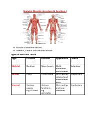 Skeletal Muscle 1