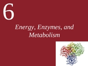 Ch06- Energy-Enzymes and Metabolism