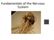 Week 8 Ch. 12 Nervous System Basics Powerpoint Lecture