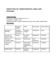 IDENTIFYING OF CARBOHYDRATES, LIPIDS, AND PROTEINS.docx