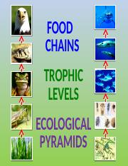 12 - food chains trophic levels and ecological pyramids - power point.pptx autos