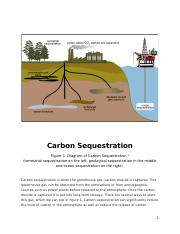 Carbon Sequestration.docx
