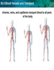 Arteries and Blood