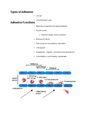 Types of Adhesion