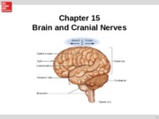 Chapter 15 Brain and Cranial nerves.ppt