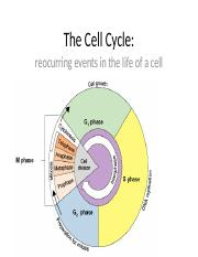 9_2mitosis_cell_cycle.pptx