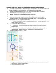 Cellular respiration overview and Redox reactions .docx