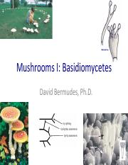 13. Mushrooms I.  Basidiomycetes 4.18.17.pdf