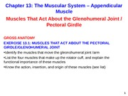 Appendicular Muscle Glenohumeral joint