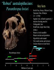 Early Homo.ppt