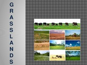 Introducing Grasslands Presentation