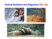 Anim_Lect2_Animal_nutrition_final