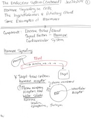 Lecture 8- the endocrine system