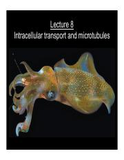 Lecture 8--intracellular transport.pdf