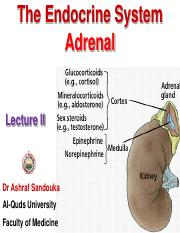 26- The Endocrine System - Lecture II.pdf