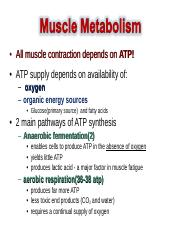 Muscle Tissue Part 3 (2).ppt