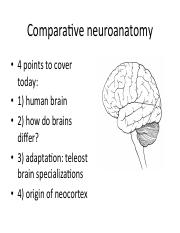 Comparative neuroanatomy.bio335.2017.w_o clicker qs.pdf