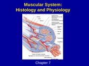 Muscular system - histology and physiology