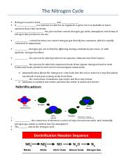 The Nitrogen Cycle Handout.docx