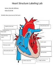 Lab Heart Structure Labeling Heart Structure Labeling Lab Name