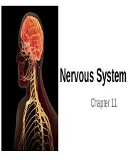 Chapter 11-15 -Nervous system and senses.pptx