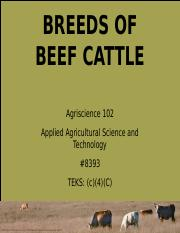 Breeds of Beef Cattle pwrtpont
