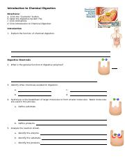 anim_intro_chemical_digestion_worksheet.doc