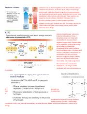 ATP and glycolysis.docx