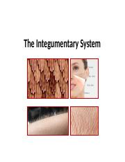 Integumentary System [Autosaved]