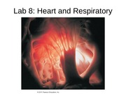 Lab+8+Heart+and+Lungs