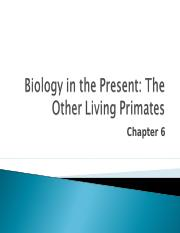 Lecture 6 - Chapter 6 - Primate overview.ppt