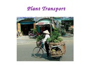 Lecture 7 - Plant transport
