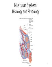 Muscle Histology and Physiology(1).pptm