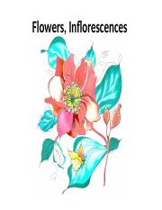 Flowers-inflorescences morphology .ppt taxo