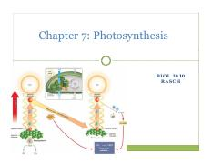 BIOL 1010 Chapter 07 Photosynthesis students.pdf