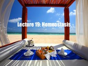 3_2F Lecture_19_Homeostasis