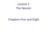 Lecture 2  The Neuron