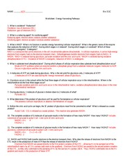 311C worksheet8_Respiration+A
