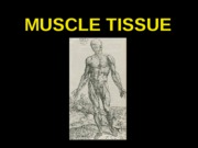 ANP 300 - Lecture 7 - Muscle Tissue