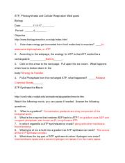 atp photosynthesis and cellular respiration webquest answer key