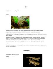 Animal name                  fish              amphibian                    reptile
