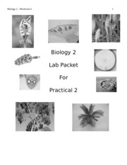 Lab Packet2