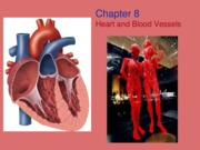 CH 8: Heart and Blood Vessels