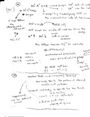 Notes on Enzymes and DNA synthesis