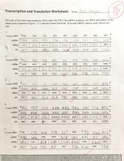 Transcription Translation Worksheet.pdf - Transcription ...
