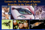 P10-Lecture 14-Speciation- March 8