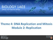 DNA replication and mitosis - replication
