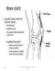 knee lecture.ppt